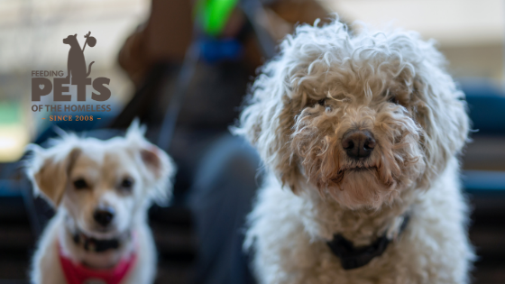 Two small dogs image for why you need a marketing and PR agency to improve your business blog post